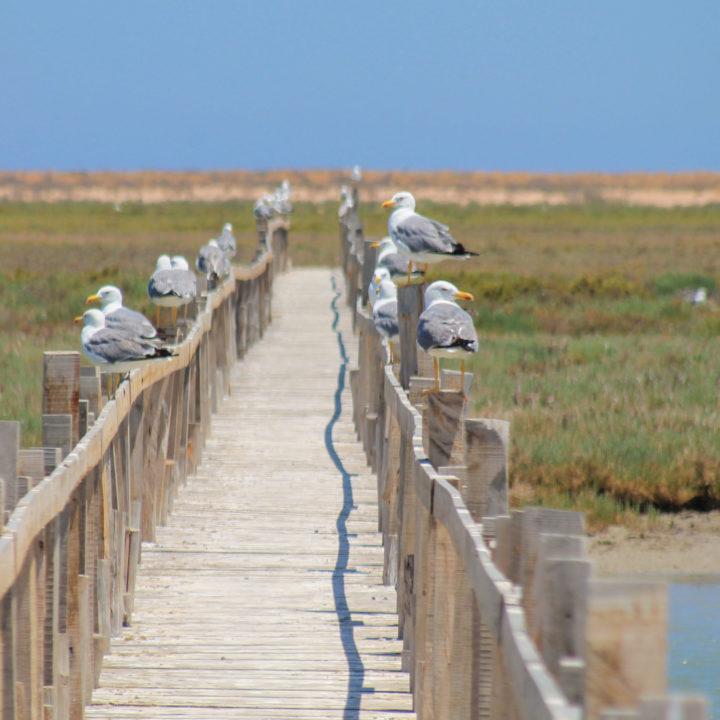 La réserve naturelle el Kneiss المحمية الطبيعية بجزر الكنائس