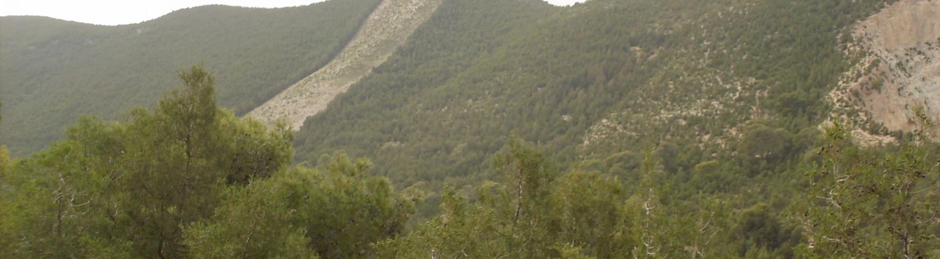 Boukornine : où se trouve le plus petit mammifère du monde