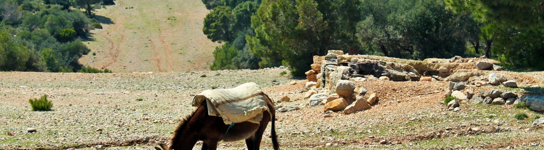 Djebel Serdj جبل السرج