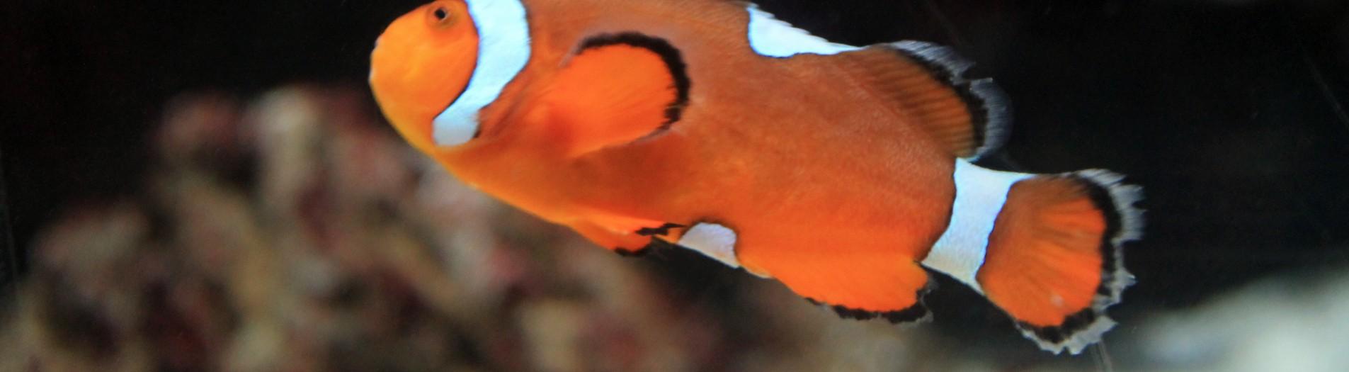 Les poissons du monde