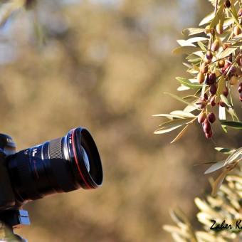 Sfax et l'olivier, une histoire