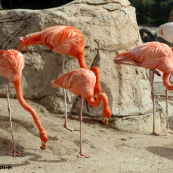 Le parc animalier Friguia