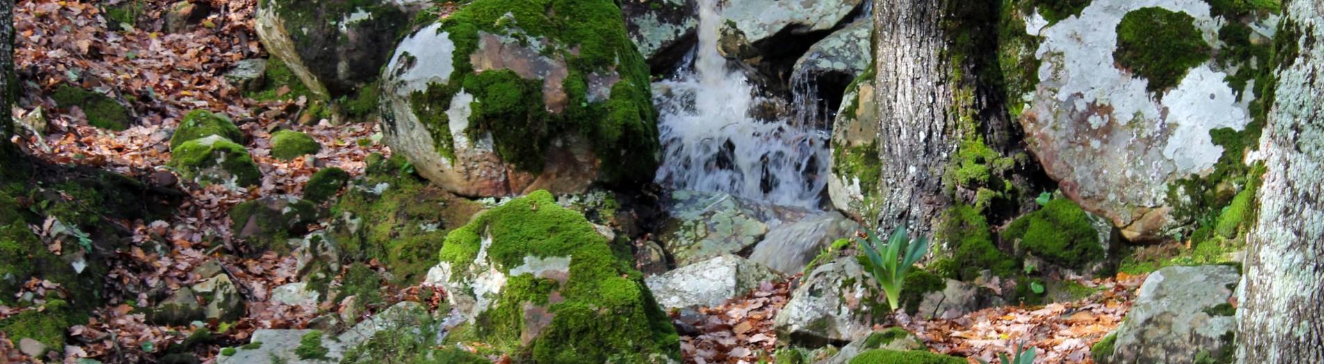 Le parc national El Feija الحديقة الوطنية بالفايجة