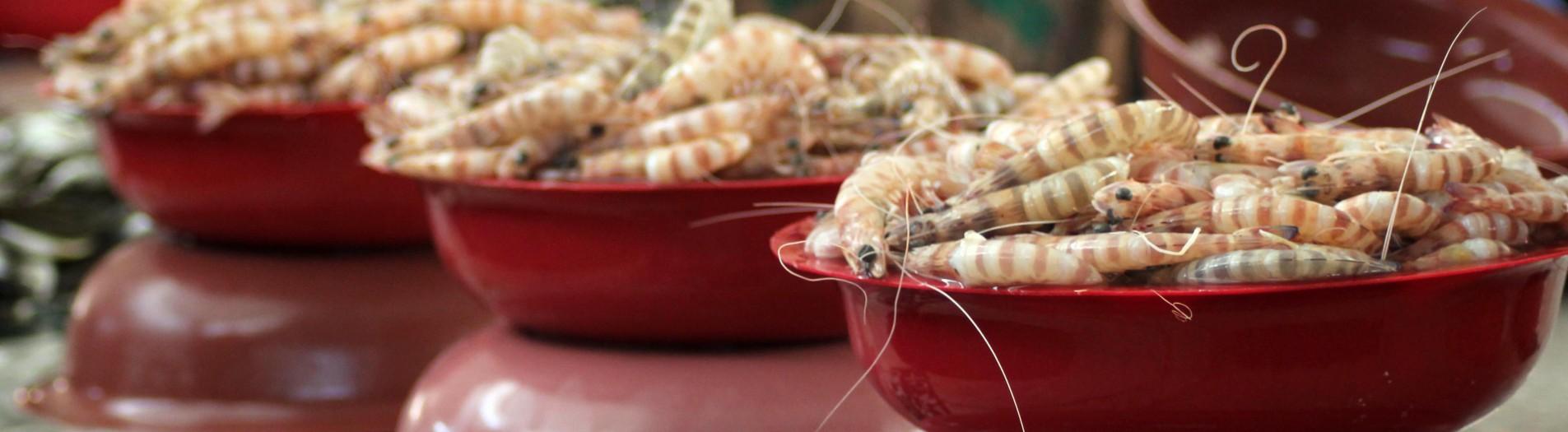 Marché de poisson de Sfax سوق الحوت بصفاقس