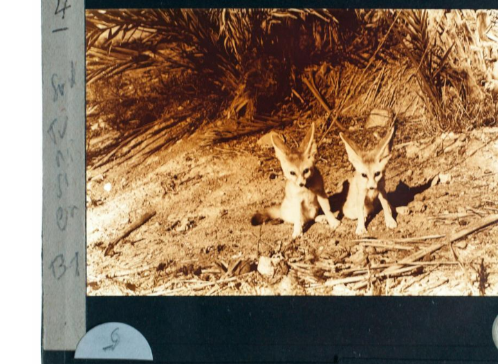 Le premier zoo à Sfax et même en Tunisie