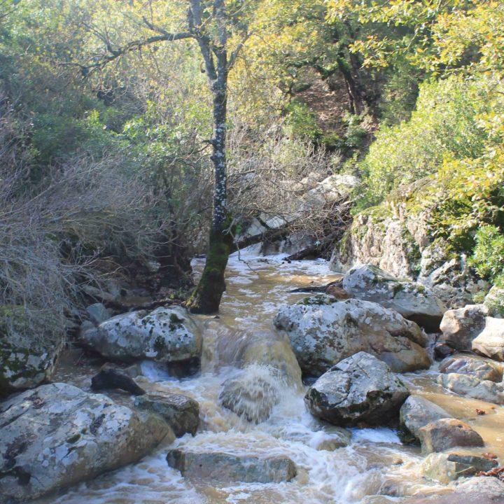 Le parc national Feija : la plus belle zénaie du monde