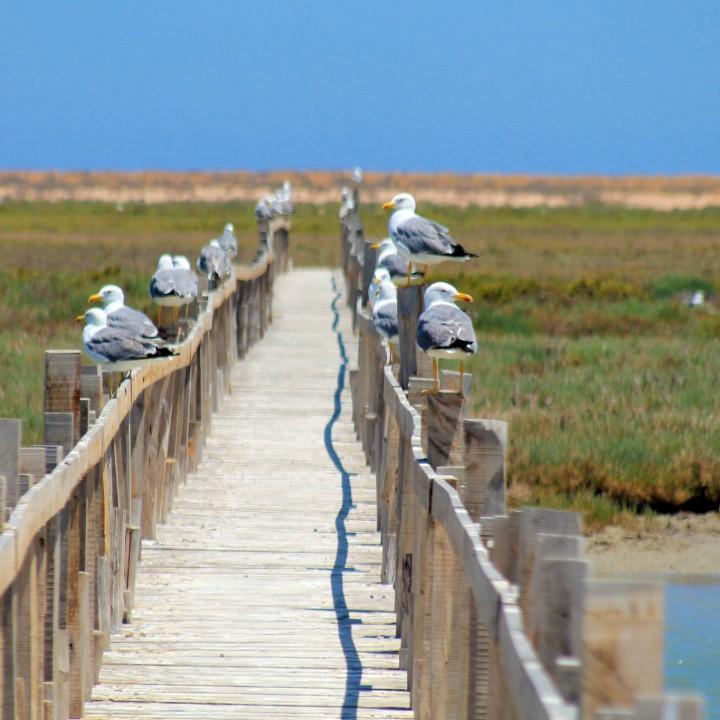 La réserve naturelle des îles d'El Kneiss