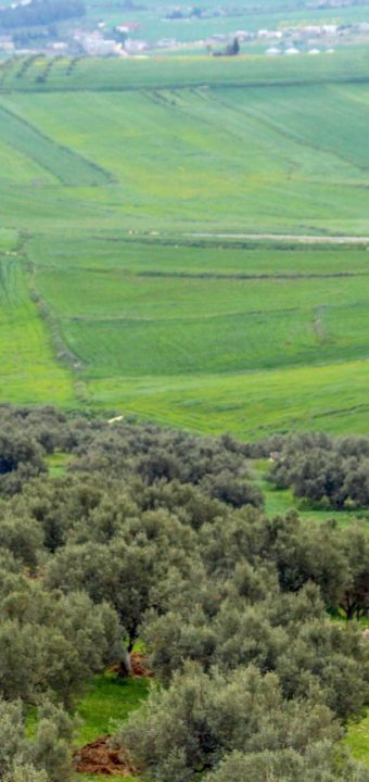 Le site archéologique de Dougga الموقع الأثري بدقة
