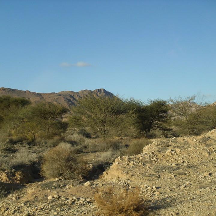 Le parc national Bouhedma : la savane africaine chez nous