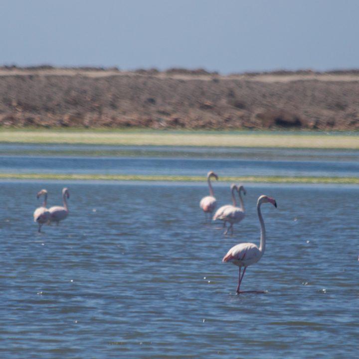 La réserve naturelle des salines de Thyna