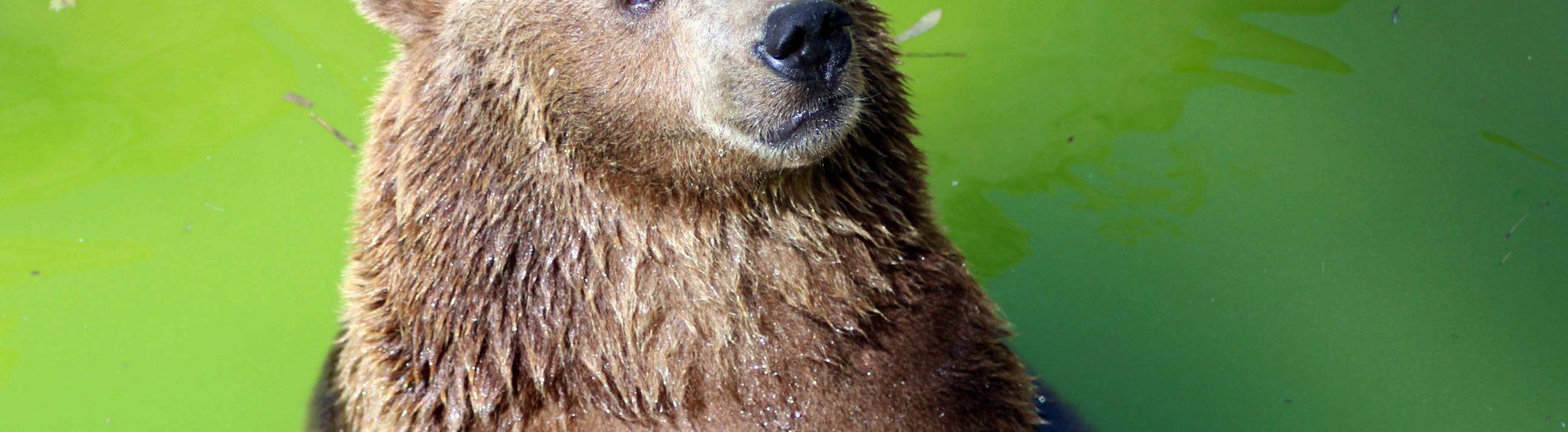 Le zoo du Belvédère حديقة البلفيدير