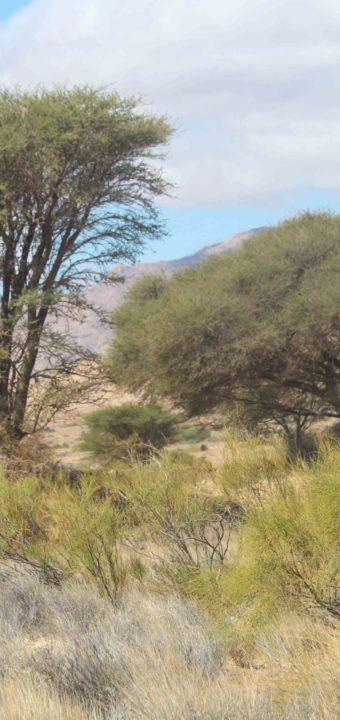 Le parc national de Bouhedma الحديقة الوطنية ببوهدمة