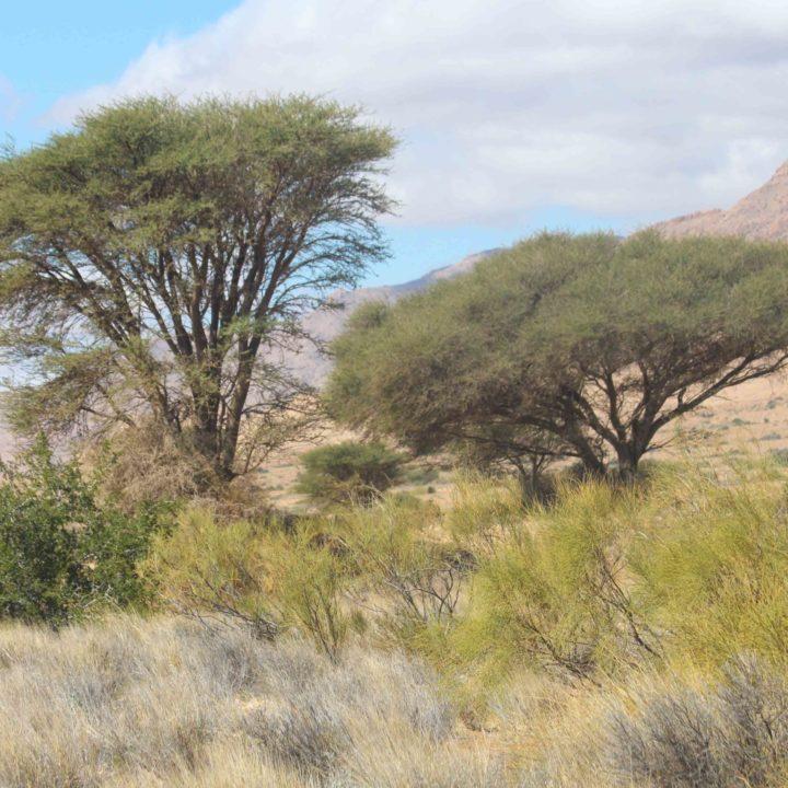 Le parc National de Bouhedma